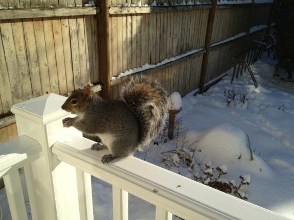 Georgie Squirrel 2